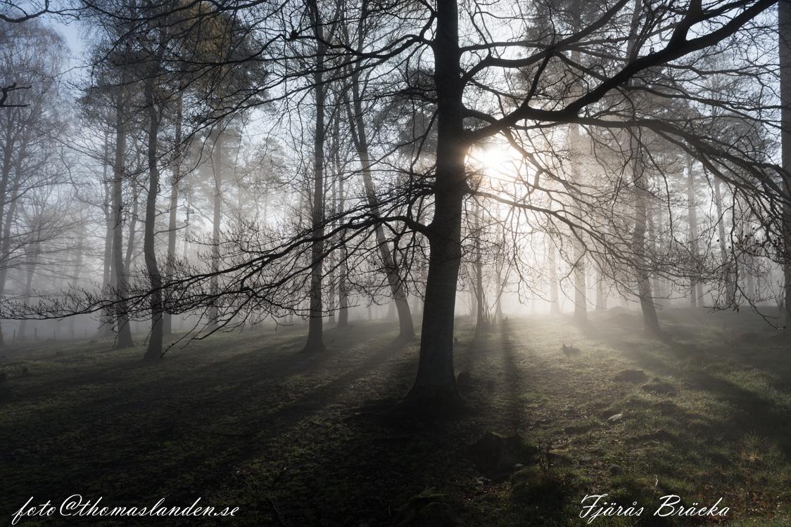 Fjärås-Bräcka